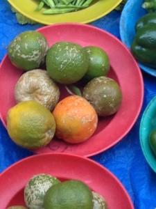 Fiji Lime