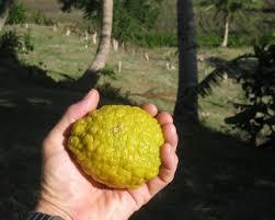 Fiji Lemon