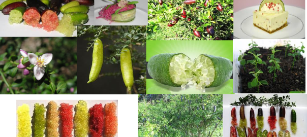Finger Lime Mix Citrus australasica