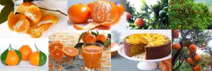 Mandarin mix (Citrus_Reticulata)
